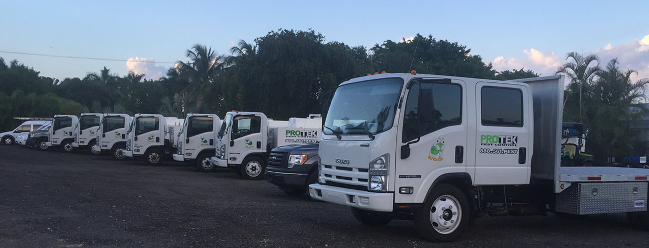 pest control exterminators landscaping lake worth palm beach florida Home